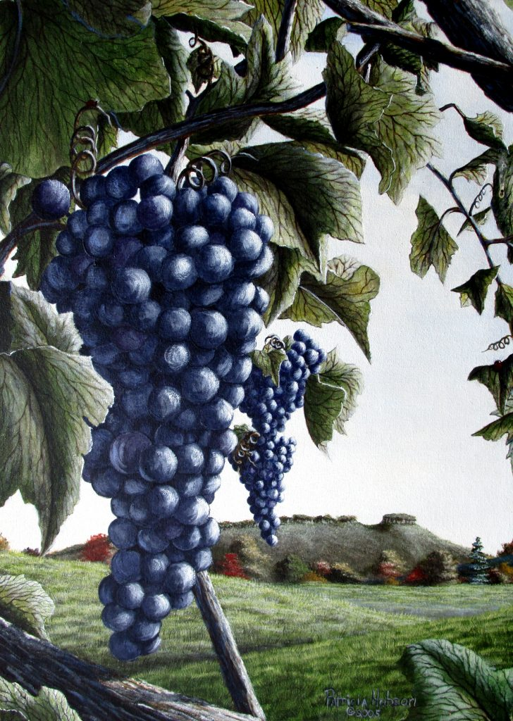 """""""Wine Country"""" is a fall art print with a view of Pilot Mountain, NC seen through bunches of delicious grapes of a local vineyard in Yadkin County, NC."""